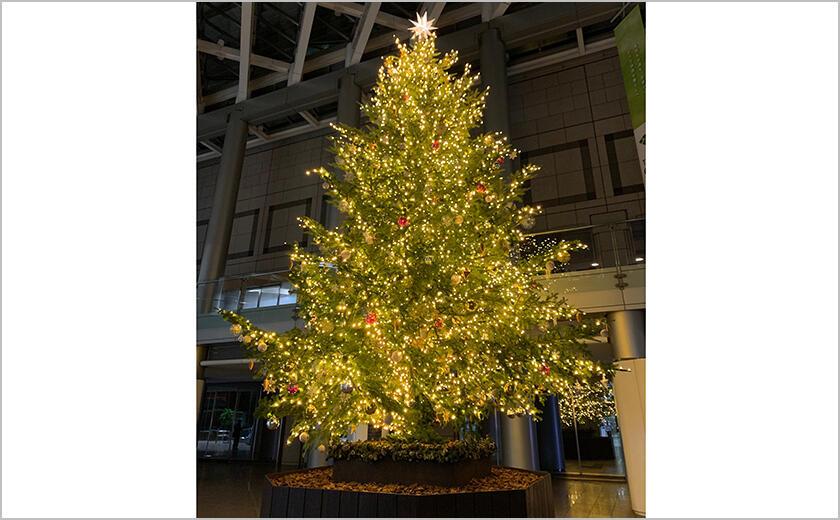 クリスマスツリー展示
